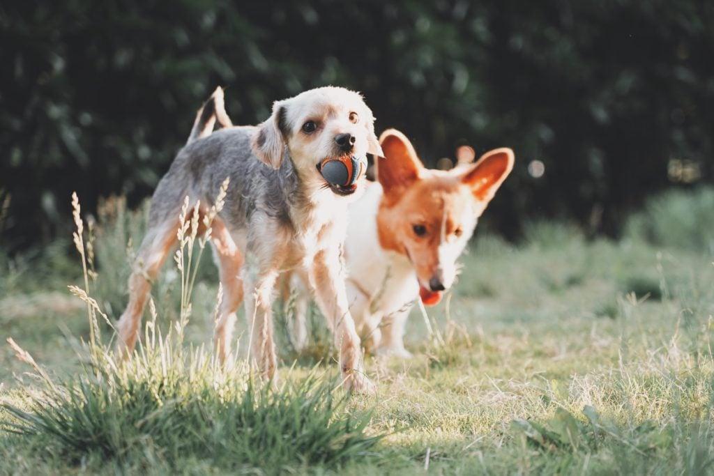 ElleVet two dogs