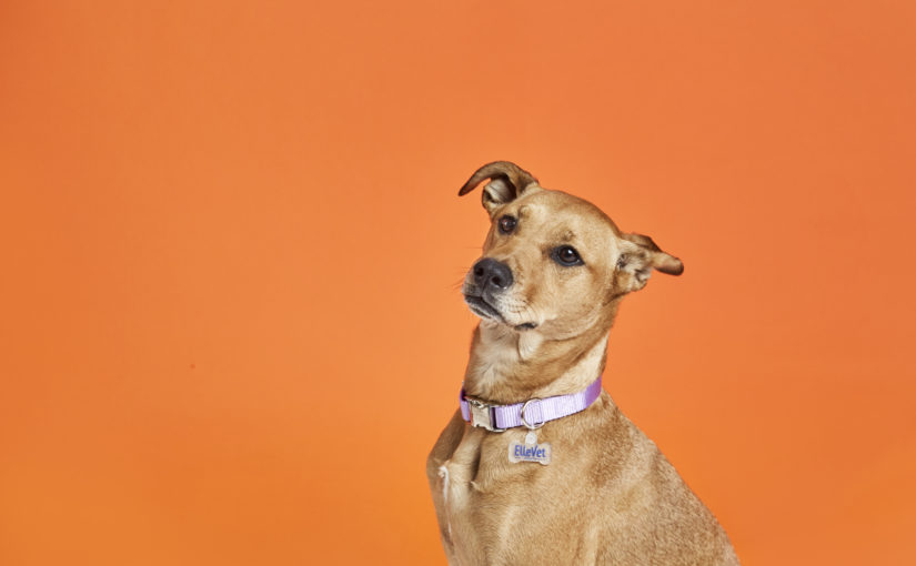 Can CBD Help Your Rescue Dog?